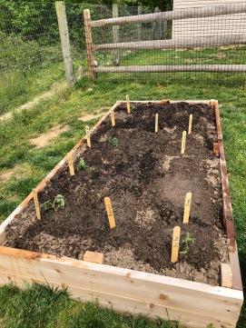 We finished planting