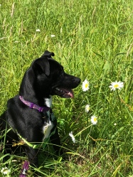 Stop and smell the daisies.